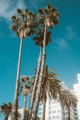 Sony A7 II Los Angeles - 023
